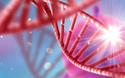 Project Sheds Light on What Drives Genes By Gina Kolata